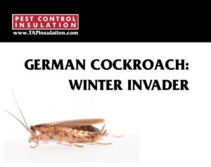 German Cockroach Winter Invader