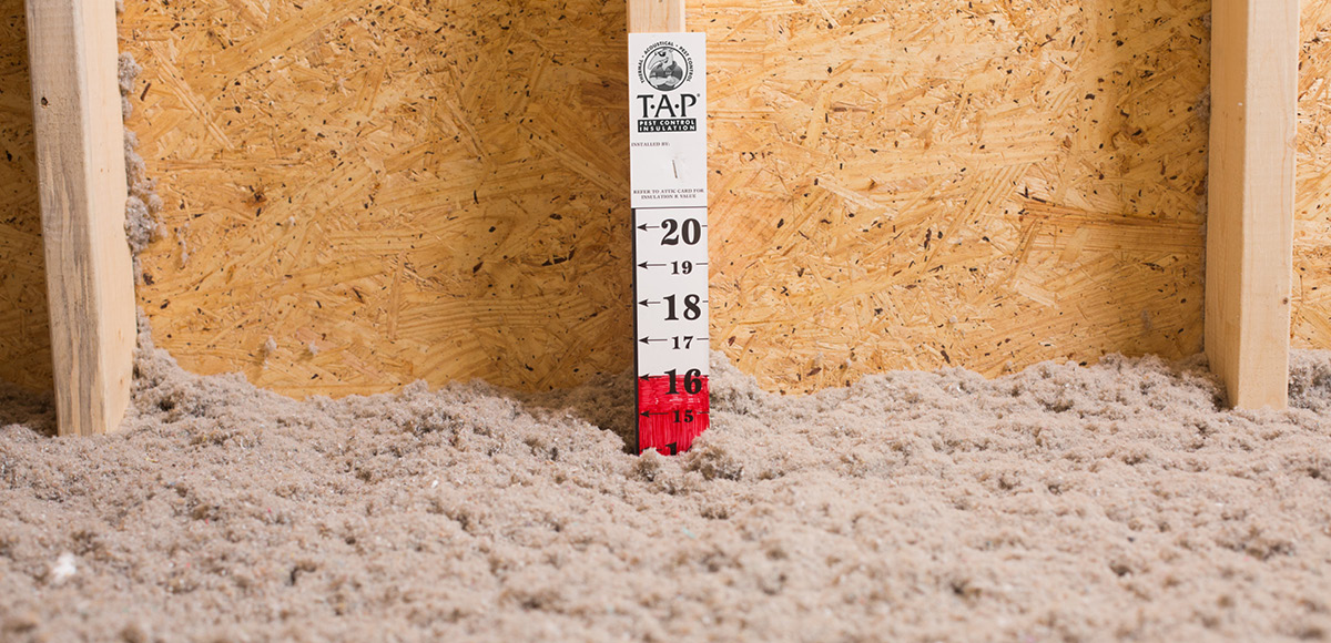 TAP Pest Control Insulation and Attic Ruler