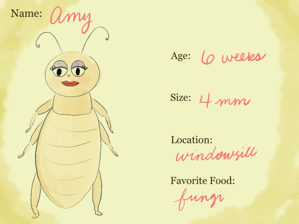 Amy, of the Family of Booklice