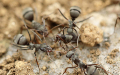 How Ants Find Their Way
